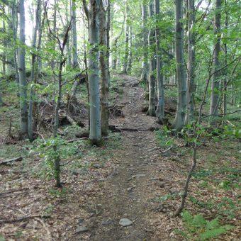 Bieszczady inaczej, czyli puste szlaki i legowisko niedźwiedzia