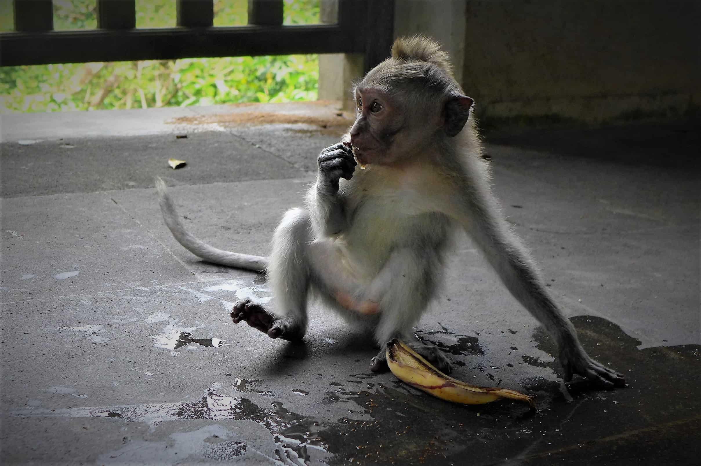 Monkey forest Ubud, Zwiedzanie Bali