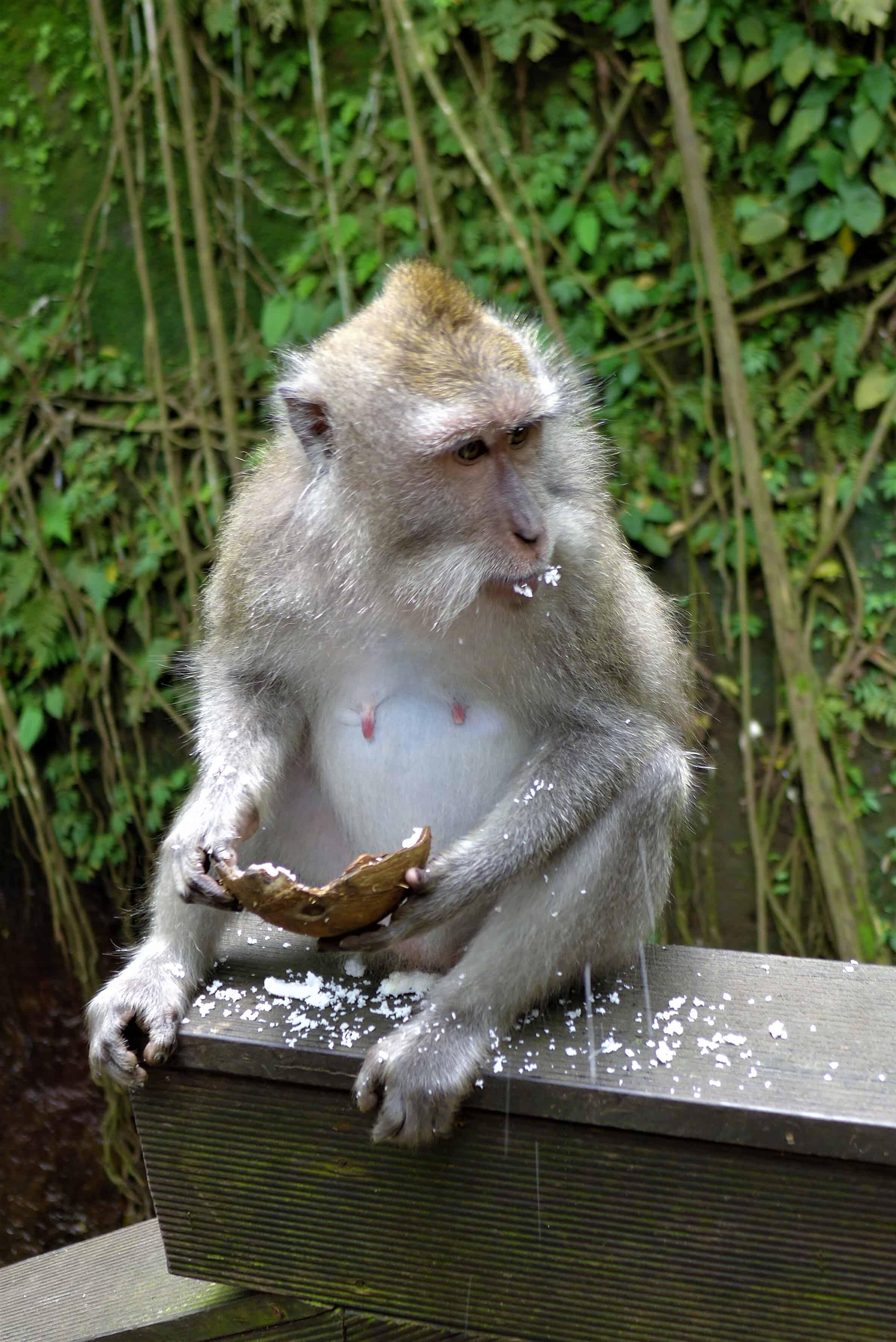 Zwiedzanie Bali, Monkey Forest