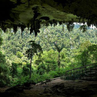 Niah Caves – pierwsza wizyta w dżungli