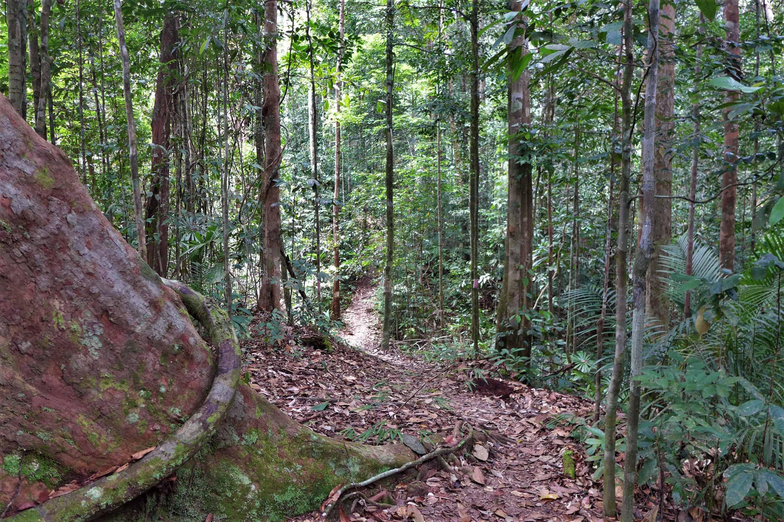 Lambir National Park