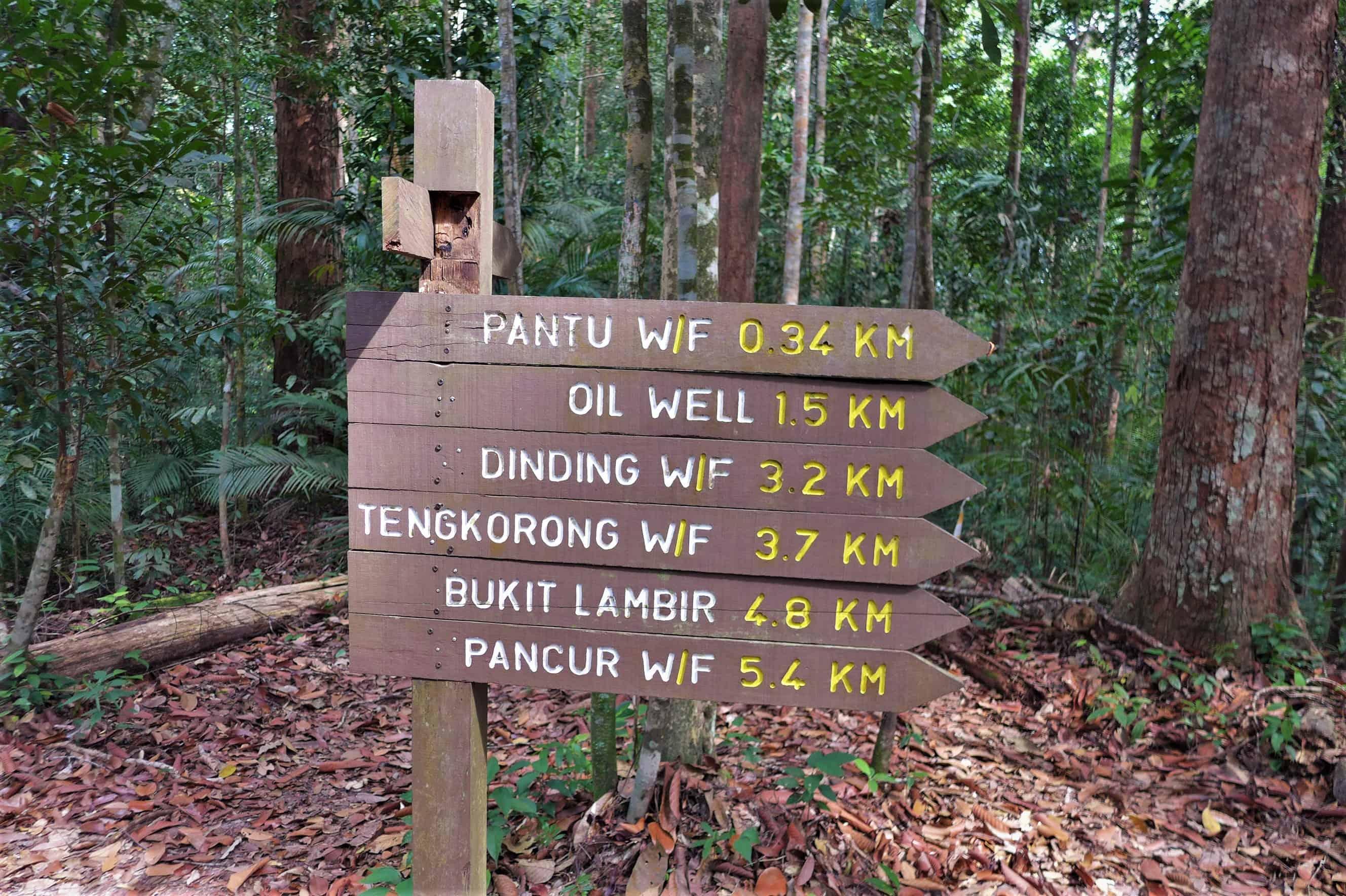 Lambir trails