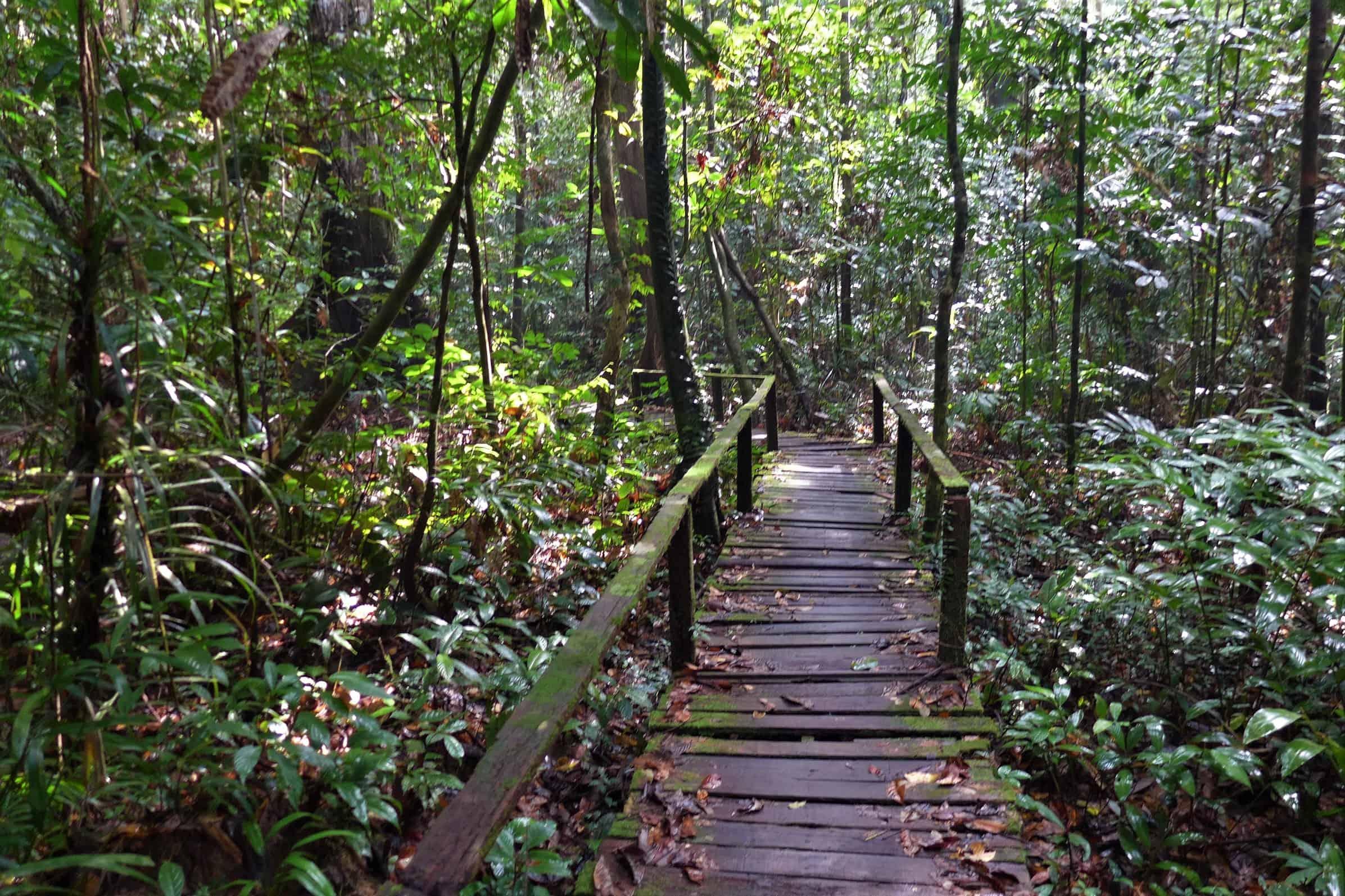 Kubah National Park, treking w dżungli