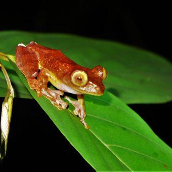 Park Narodowy Kubah – o spotkaniu z żabami