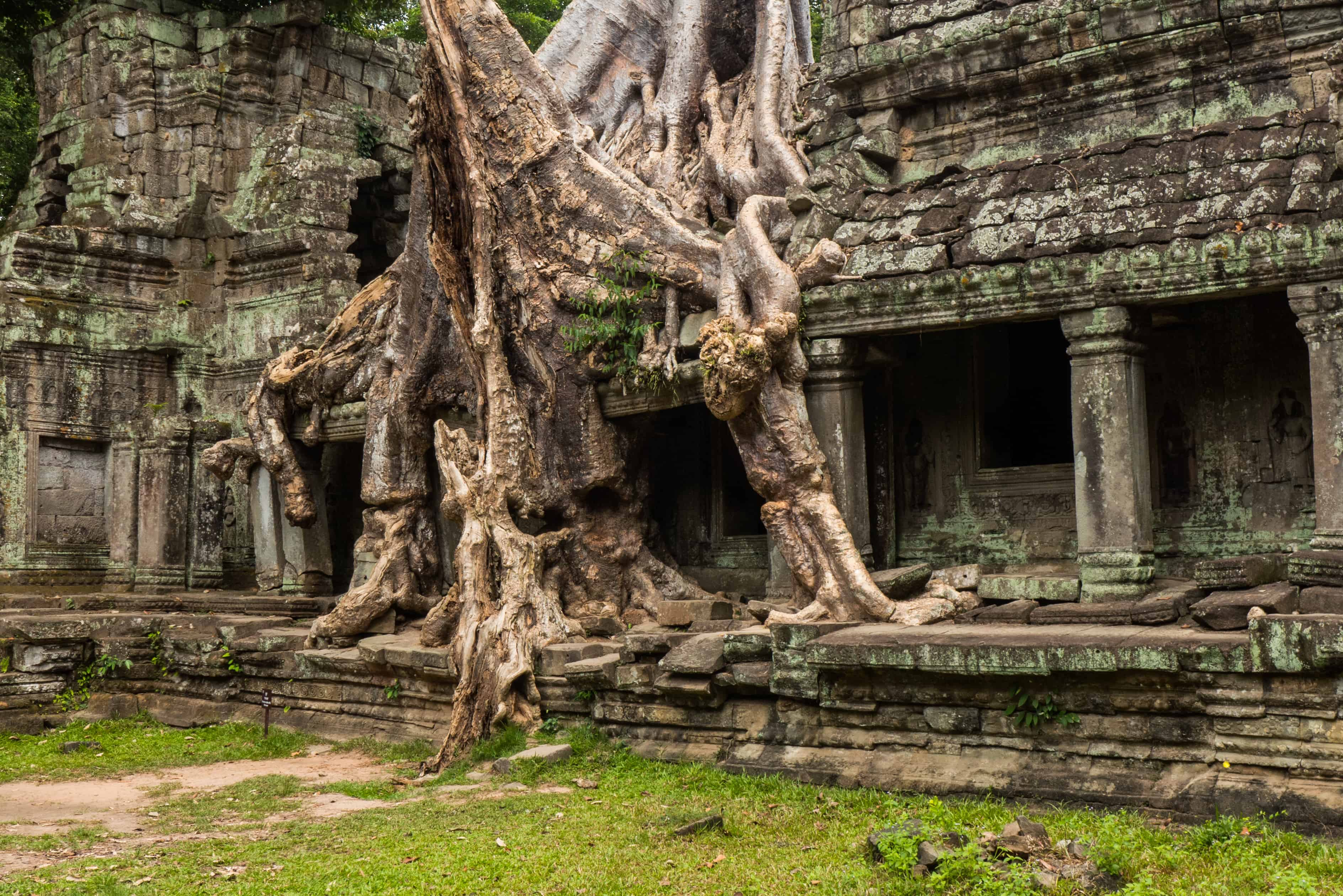 Praeh Khan, drzewo, Angkor Wat zwiedzanie