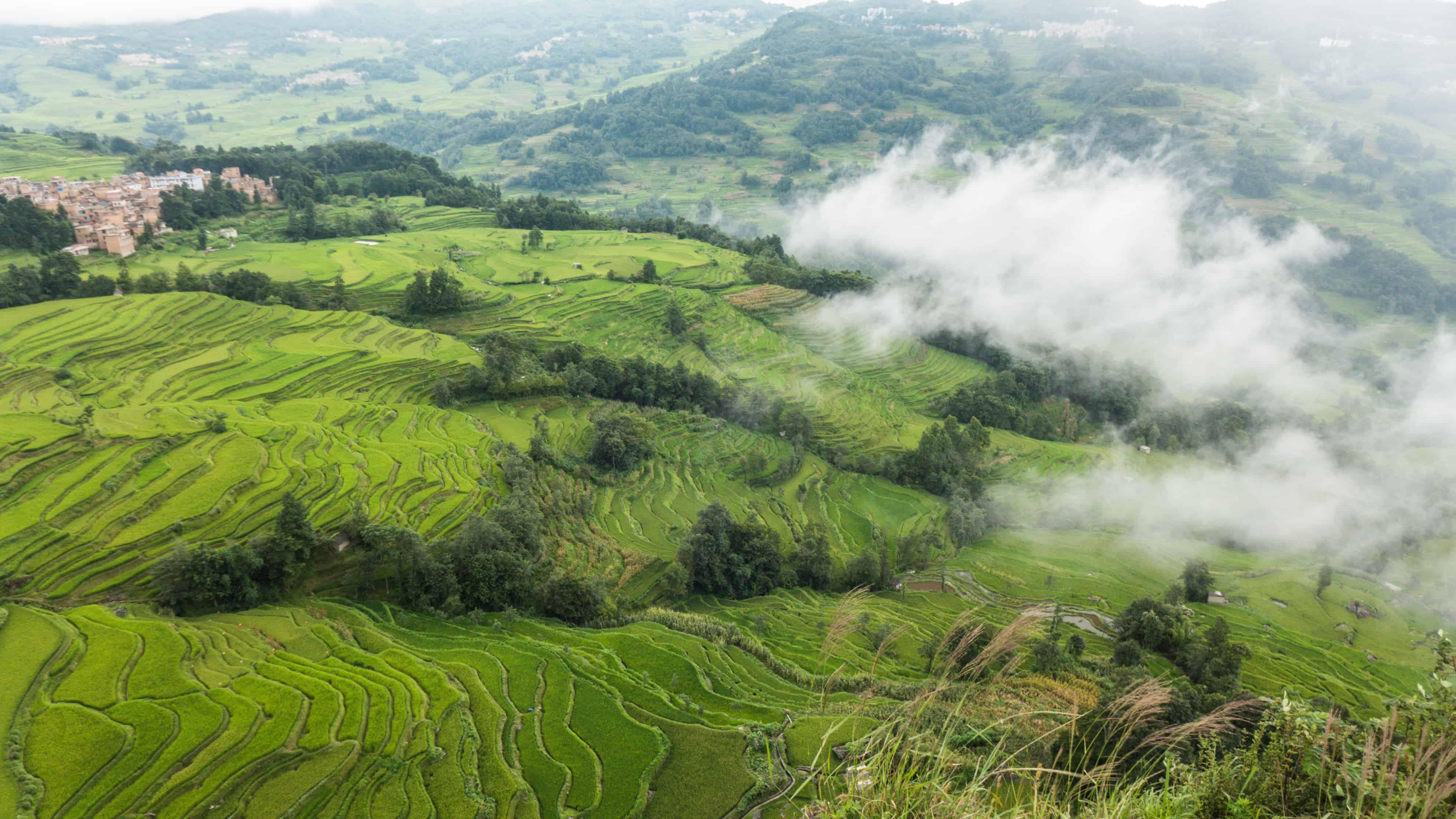 Yuanyang tarasy ryżowe