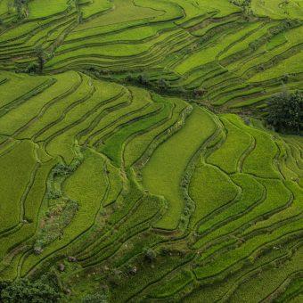 Yuanyang – tarasy ryżowe w prowincji Yunnan