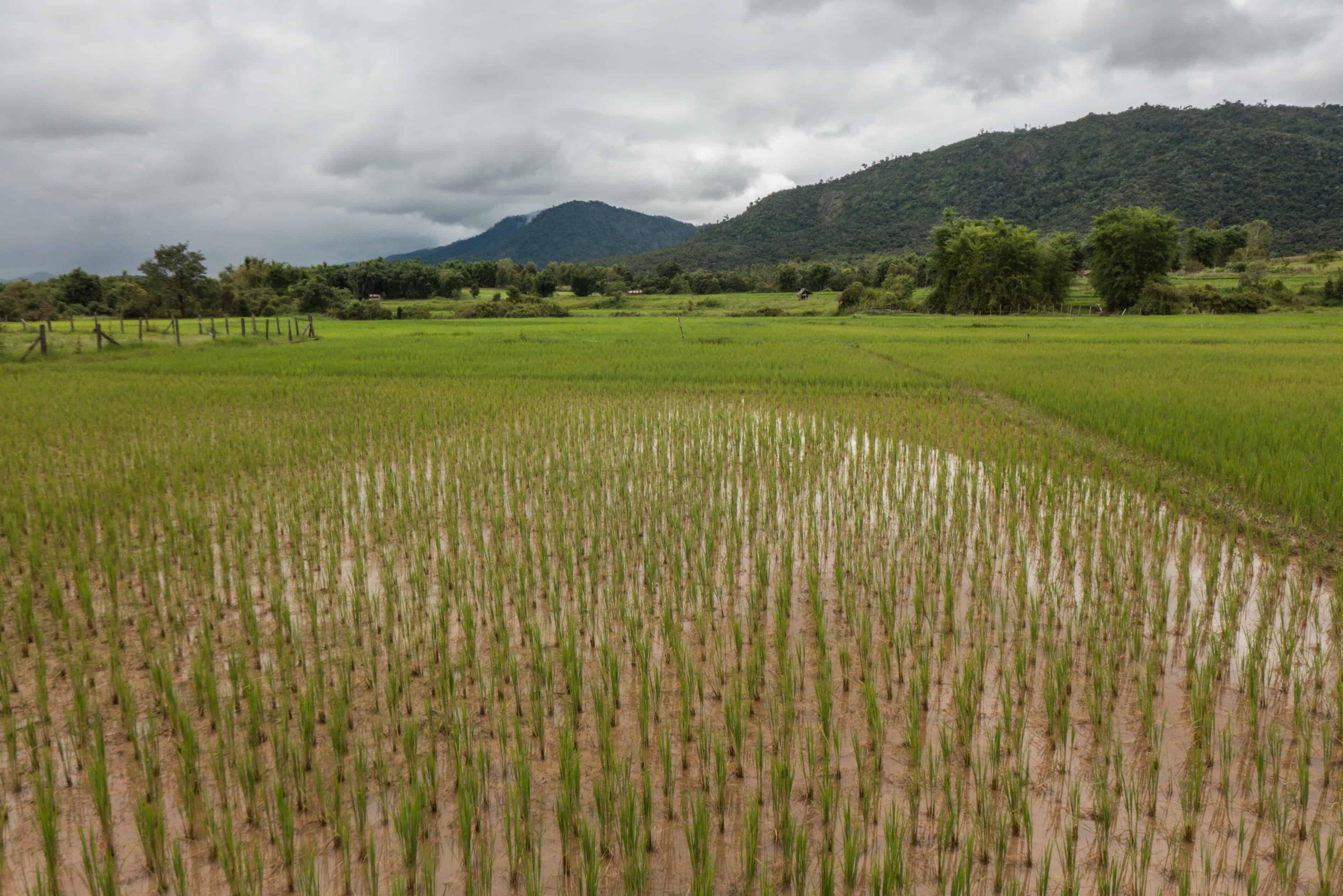 Równina Dzbanów; Laos