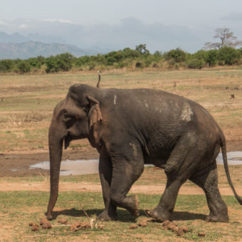 Safari na Sri Lance: Park Narodowy Udawalawe