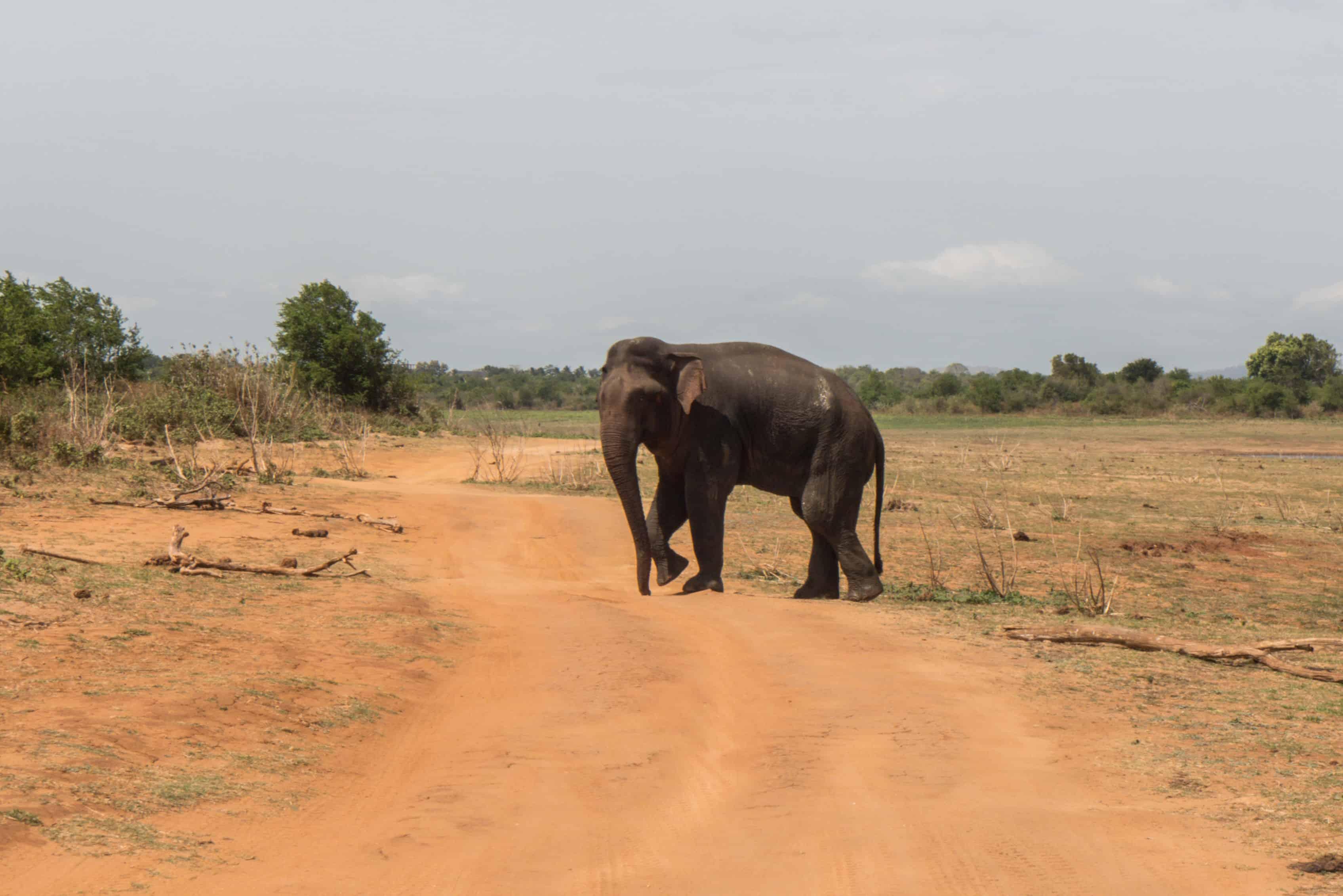 Udawalawe; Safari Sri Lanka