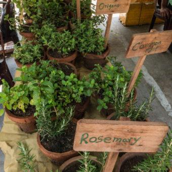 Good Market, czyli jak spędziliśmy sobotę w Kolombo