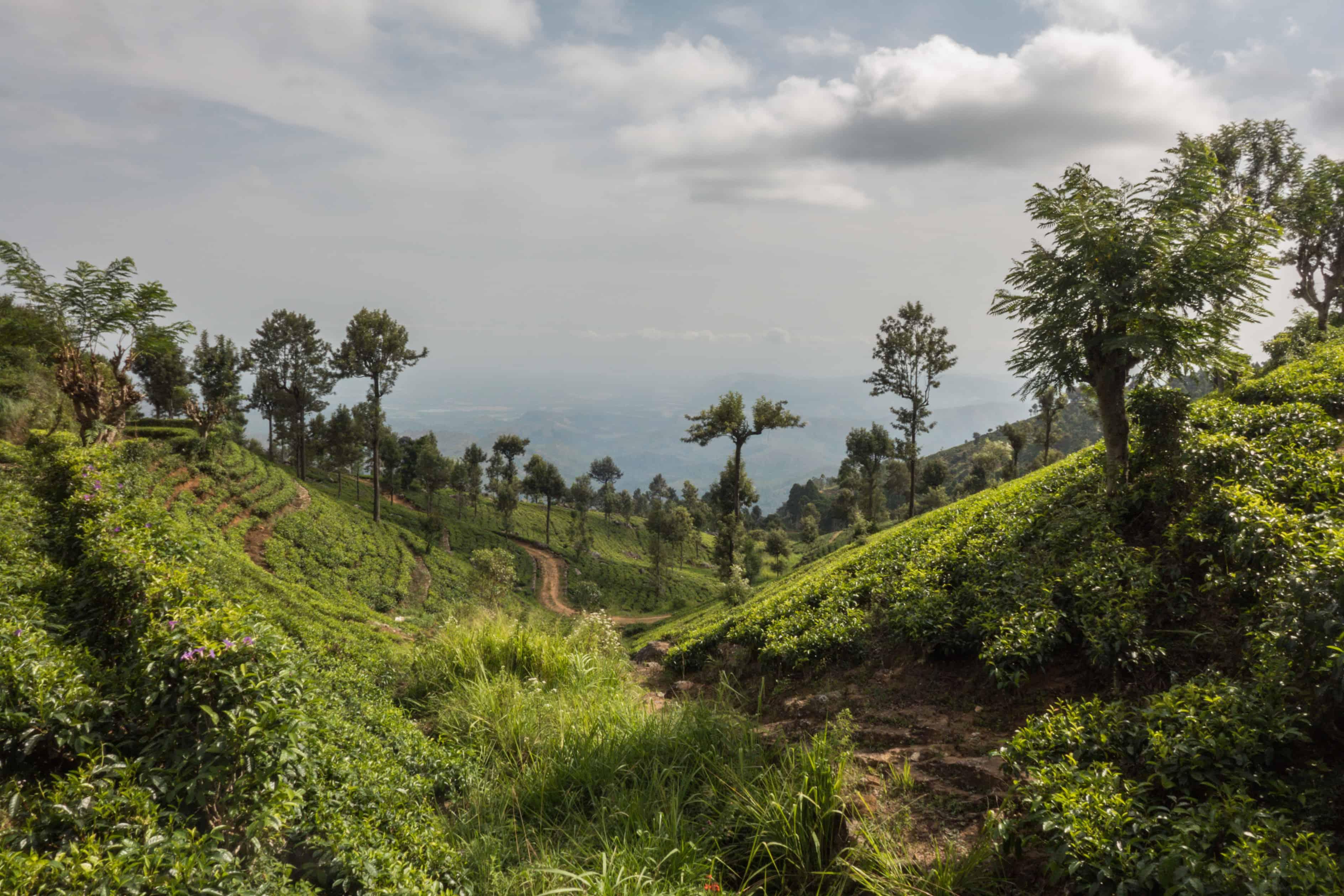 Sri Lanka. co zobaczyć ; Haputale