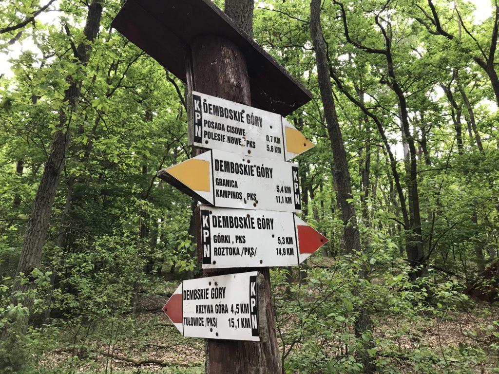 Główny Szlak Puszczy Kampinoskiej